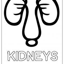 kidneys coloring picture