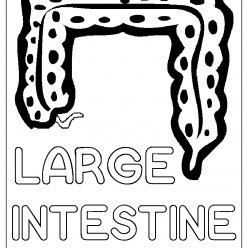 large intestine coloring picture